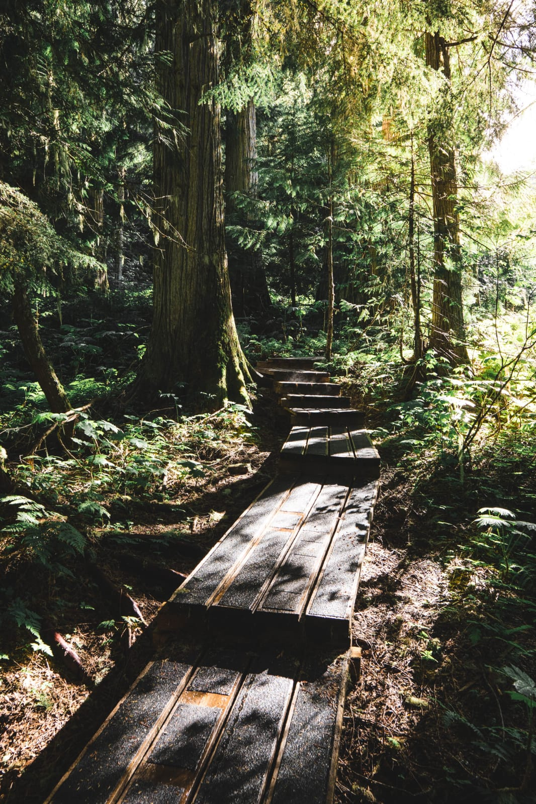 A wooden path in a forest