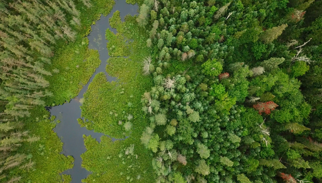 an aerial view of an SFI certified forest in Nipissing Forest, call this place home