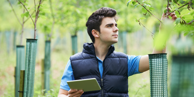 man holding tablet inspects young trees