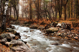 A stream running through a forest
