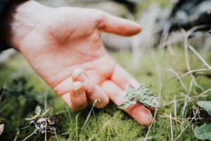 A hand touching a small plant