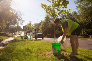 A young person pouring water into a bucket on a green neighbourhood street