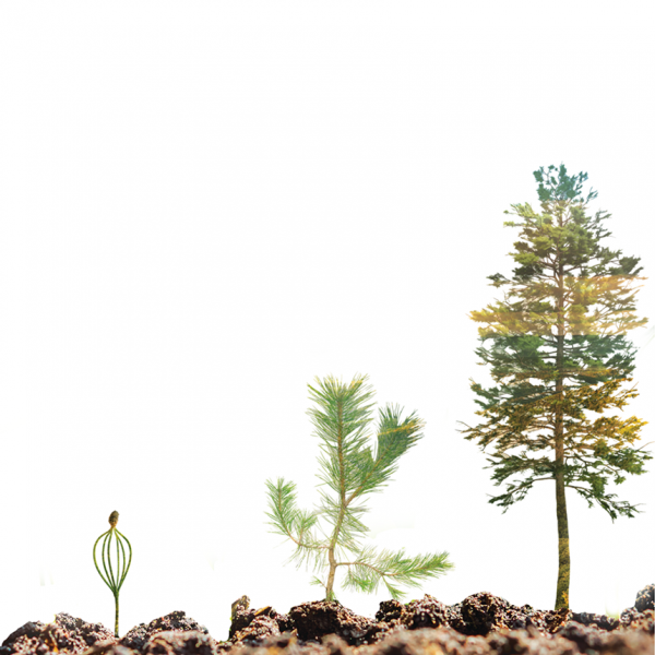 Three trees in different stages of their life